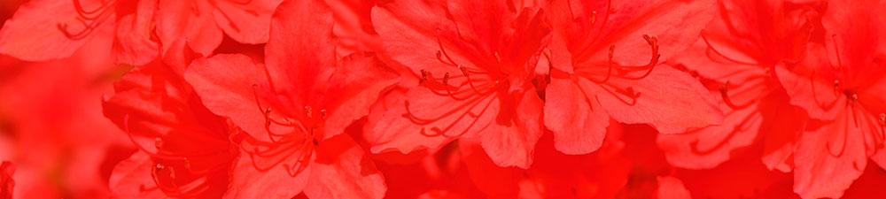 Rouge Poivrée - Fond