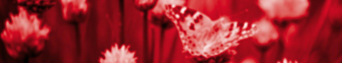 Rouge Poivré - Entête site Web