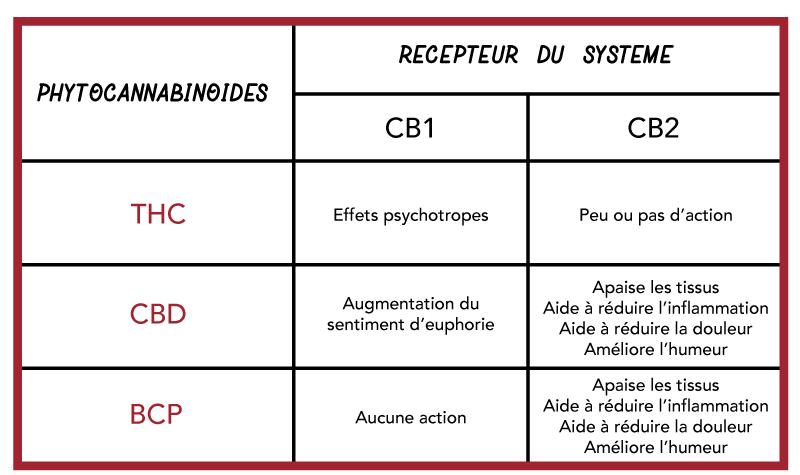 Tableau comparatif entre le THC, le CBD et le BCP.