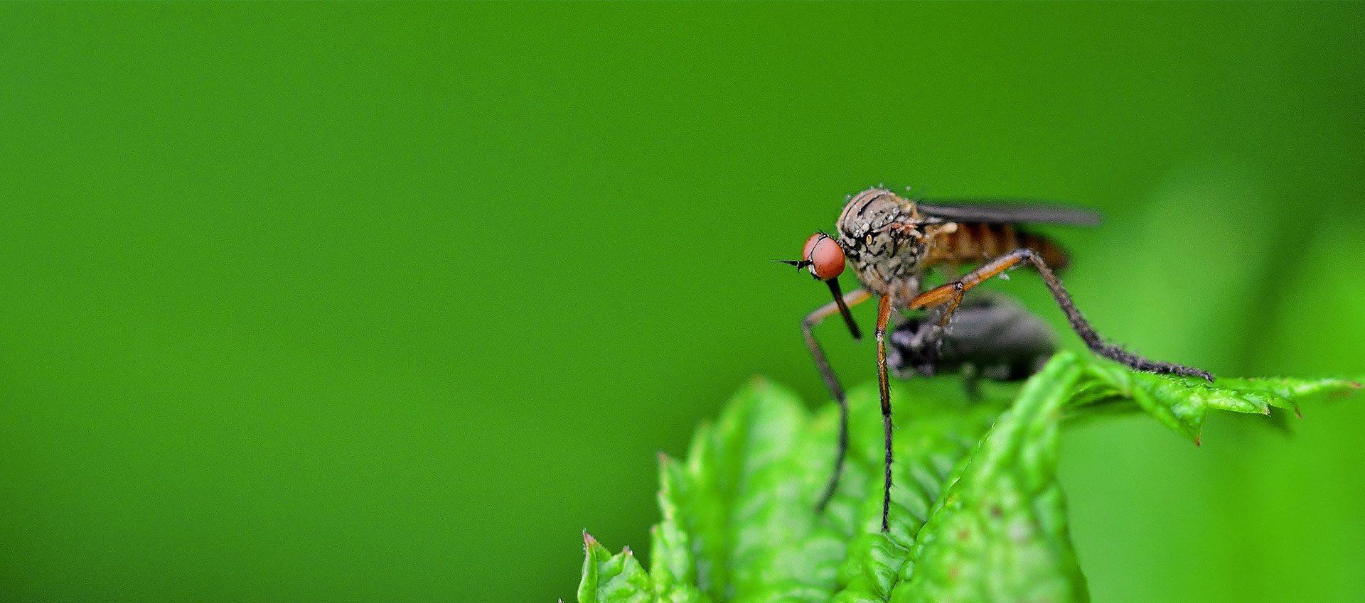 Huiles anti moustique